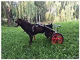 Geyao Perro flexibilidad Silla de Ruedas Ajustable for 25kg - 55kg Perros más Grandes (XL, XXL) Las piernas traseras lesionadas Assist móvil 2 Ruedas, Peso Ligero con Silla de Ruedas (Size : XL)