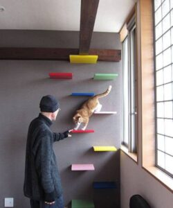 Estantes Para Gatos